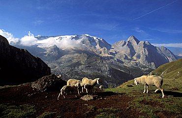 Marmolada mountain chain, Trentino Alto Adige, Italy