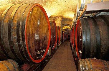 Cellar, Salis palace, Tirano, Lombardy, Italy