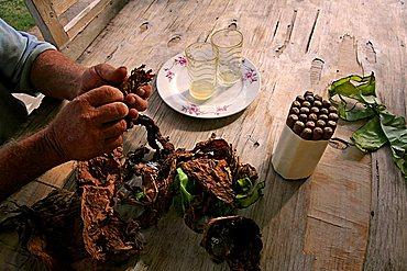 Cigar preparation, Vi, Vinales, Cuba, West Indies, Central America