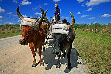 Campesino, South Coast, Playa Las Coloradas, Cuba, West Indies, Central America