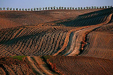 Landscape, Tuscan countryside, Tuscany, Italy, Europe