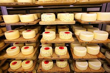 Mutschli cheese, Bassa Engadina, Switzerland, Europe