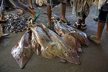 Eagle ray, fish market, Al Hodeidah, Yemen, Middle East
