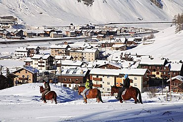 Excursion with horse, Livigno, Lombardy, Italy
