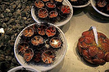 Echinus, Fish market, Catania, Sicily, Italy