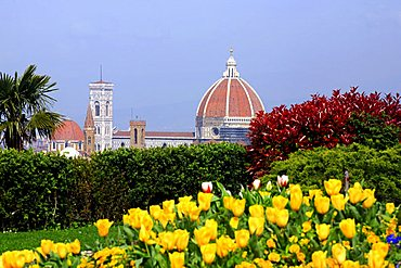 Spring in Florence and S. Maria del Fiore Cathedral, Florence, Tuscany, Italy