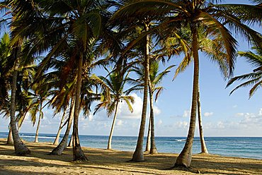 Landscape, Punta Cana, Dominican Republic, West Indies, Central America