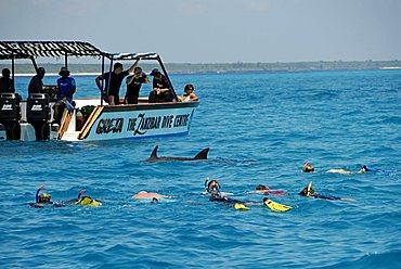 Diving with dolphins, Mnemba Atoll, Zanzibar, United Republic of Tanzania, Africa