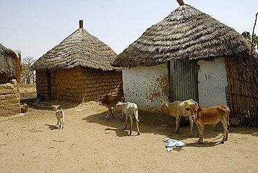 Huts in a Peul village, Republic of Senegal, Africa