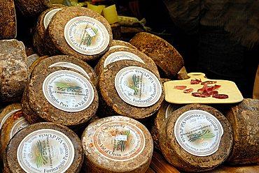 Cheese, Pecorino Val d'Orcia, Siena province, Tuscany, Italy