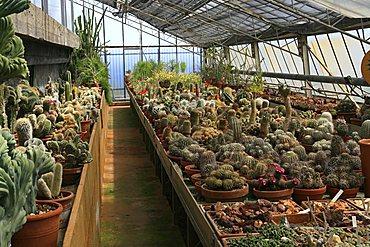Greenhouse with cactus, botanical garden of Pallanca, Bordighera, Ligury, Italy