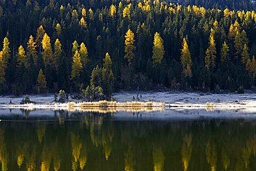 Little lake and pine forest near St. Moritz, Engadina, Switzerland