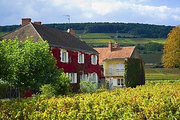 Beaune, Bourgogne, Burgundy, France, Europe