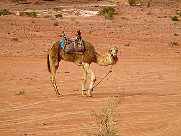 Middle East, Jordan, Wadi Rum, also known as The Valley of the Moon