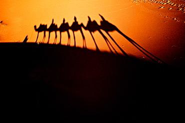 Shadows, Sahara Desert, Morocco, North Africa