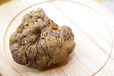 Moncalvo National  Truffle Fair, a nice piece of white truffle (Tuber magnatum) , Asti, Piedmont, Italy, Europe