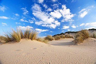Dunes, Piscinas beach, Arbus, Medio Campidano Province, Sardinia, Italy, Europe