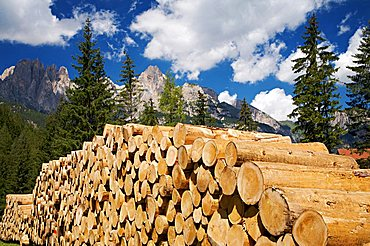 Wooden trunk, in the background the Dolomites mountain, Fassa valley, Trentino Alto Adige, Italy, Europe