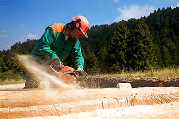 Lumberjack with chainsaw, Lessini mountain, Sega di Ala, Trentino Alto Adige, Italy, Europe