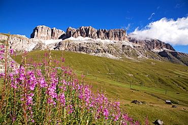 Landscape to Pordoi pass with view on Sella mountain and  Piz Bovû, Dolomites, Fassa valley, Trentino Alto Adige, Italy, Europe