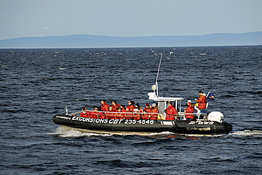 Whale-watching boat, Saint Lawrence River estuary, Quebec, Canada, North America