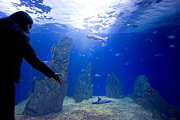 Acquario di Cala Gonone, Dorgali, Provincia di Nuoro, Sardinia, Italy