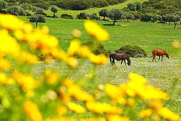 Capo Ferrato, Costa Rei. Muravera (CA), Sardinia, Italy, Europe