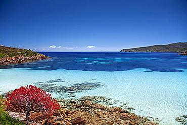 Cala Ponzesi beach, Cala Sabina, Asinara island, Porto Torres, Sardinia, Italy, Europe