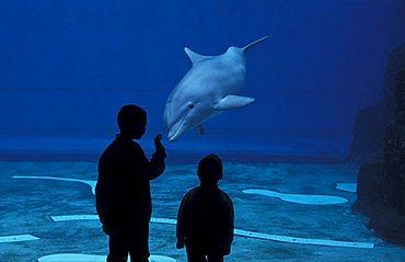 Children and dolphins, Aquarium, Genoa, Liguria, Italy