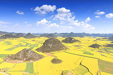 Rapeseed flowers of Luoping, Yunnan, China