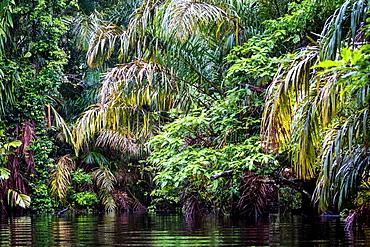 Tortuguero National Park, Costa Rica, Central America