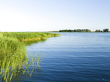 Shore of the Peenestrom in the  Usedomer Schweiz on the island of Usedom. Europe,Germany, Mecklenburg-Western Pomerania, Usedom, June