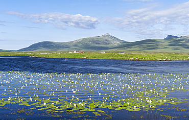 Landscape on the island of  South Uist (Uibhist a Deas) in the Outer Hebrides. Pond with Nymphaea alba, also known as the European White Waterlily, White Lotus, White Water Rose or Nenuphar. Europe, Scotland, June
