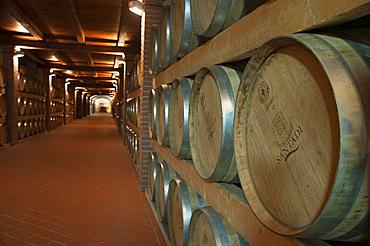 Cantina di Santadi, Sardinia, Italy, EuropeBarrel; Santadi; Sardinia; Sardinian; Traditions; Typical; Bottle; Wine; Winery; Vermentino; Carignano; Monica; Cellar; Recipe; Terre Brune; Harvest; Sulcis; Horizontal; Vertical