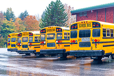 Row of school buses aligned and parked.