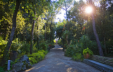 Ischia Park, Ischia island, Campania, Italy, Europe
