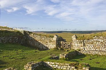 Milecastle 37 looking west, Hadrians Wall, UNESCO World Heritage Site, Northumbria National Park, Northumberland, England, United Kingdom, Europe