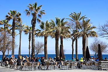 Pavement cafe and coffee bar under palm trees, promenade area, Barceloneta, Barcelona, Catalunya, Spain, Europe