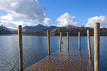 Lake Derwentwater and the northern fells, view from the boat landings at Keswick, North Lakeland, Lake District National Park, Keswick, Cumbria, England, United Kingdom, Europe