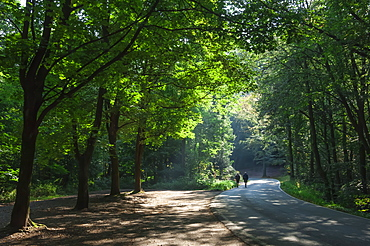 Walkers on a forest road in the Pfalz area, Germany, Europe