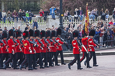 Band of the Coldstream Guards with their Standard, during Changing of the Guard, Buckingham Palace, London, England, United Kingdom, Europe