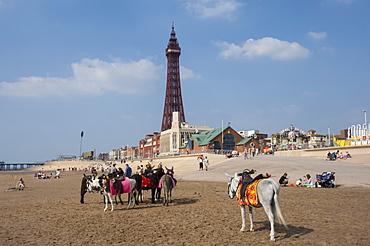 Blackpool Tower, donkeys on the beach, Blackpool, Lancashire, England, United Kingdom, Europe