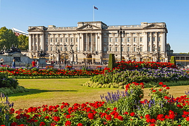 Geraniums, Buckingham Palace, London, England, United Kingdom, Europe