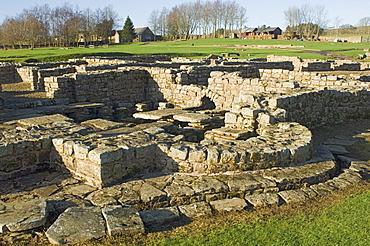 Roman Fort and settlement at Vindolanda, south side of Roman Wall, UNESCO World Heritage Site, Northumbria, England, United Kingdom, Europe