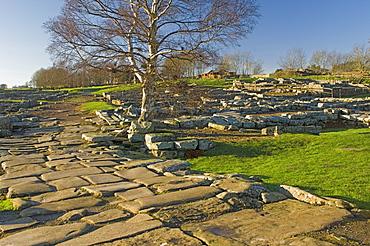 Paved roadway, Via Praetoria, and soldiers quarters, Roman settlement and fort at Vindolanda, Roman Wall south, UNESCO World Heritage Site, Northumbria, England, United Kingdom, Europe