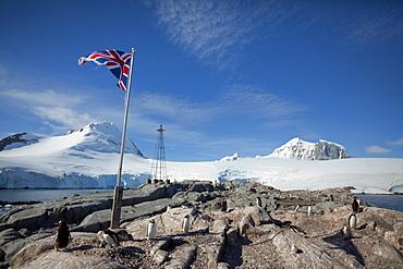 Penguin colony, English Research Station, Port Lockroy, Antarctic Peninsula, Antarctica, Polar Regions