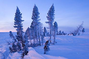 Winter Scenery, Churchill, Manitoba, Canada