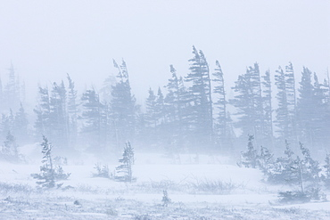 Snow storm, blizzard, Churchill, Hudson Bay, Manitoba, Canada, North America