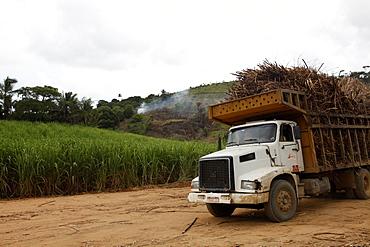 Truck loaded with sugar cane at a field near Porto de Galinhas, Pernambuco, Brazil, South America