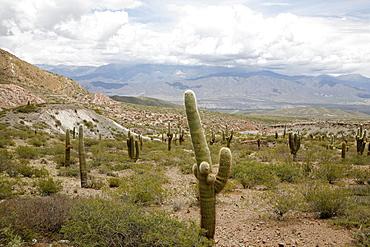 Landscape in Los Cardones National Park, Salta Province, Argentina, South America
